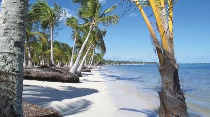 Smuk palmestrand på Den Dominikanske Republik, Caribien