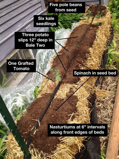 just one of many possible layout plans for a diy straw bale vegetable garden