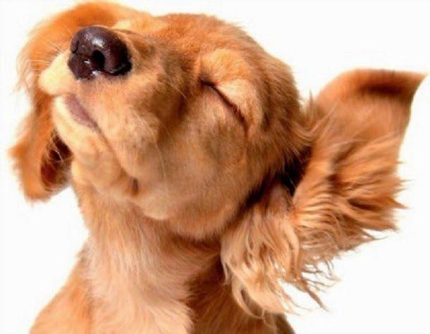 Receita caseira para combater fungos em cães | Cura pela Natureza.com.br
