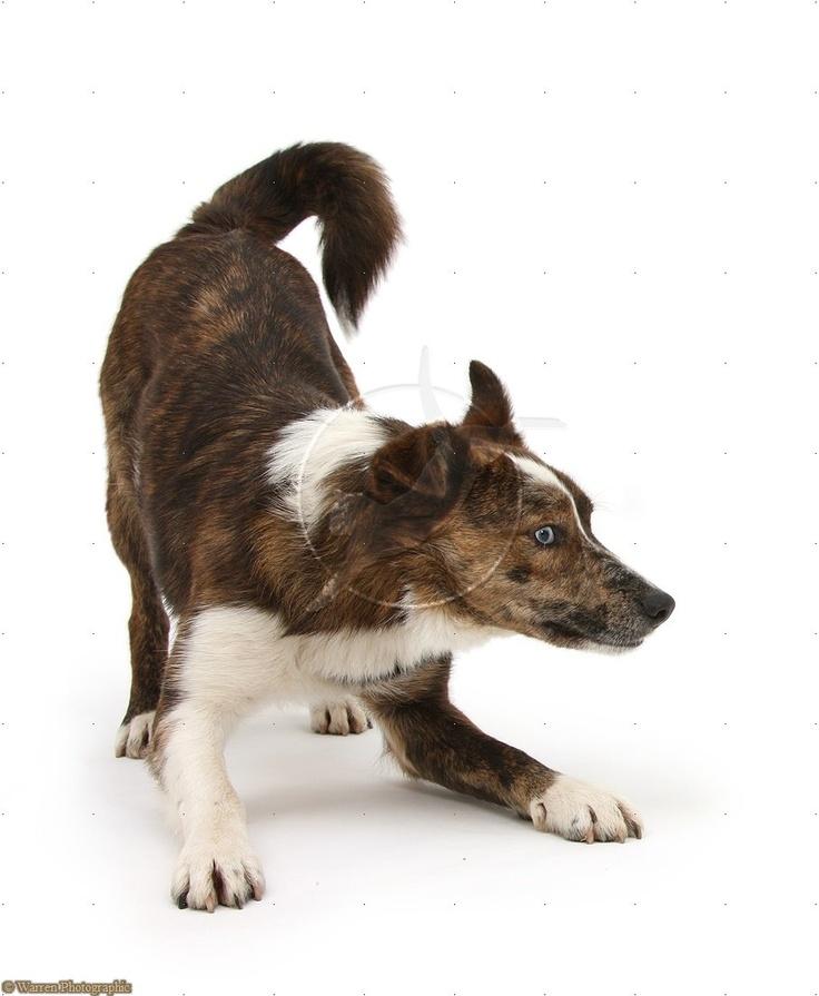 Playful mongrel dog Dogs, Dog photos, Mongrel