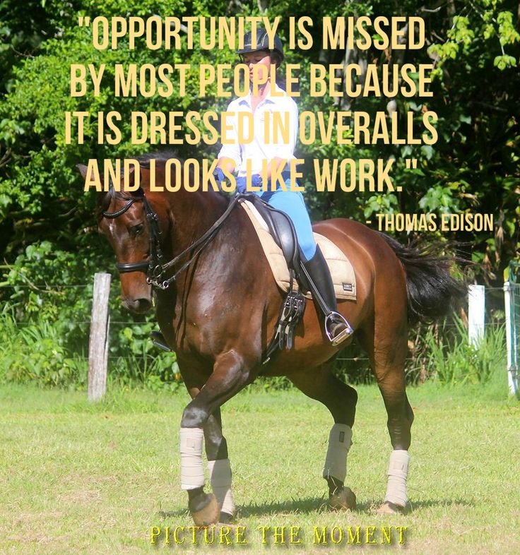 Don't miss an opportunity in 2015! We wish you happy horses, fun rides, great training and successful competitions all year long. Stacey Alexandra Equestrian Style
