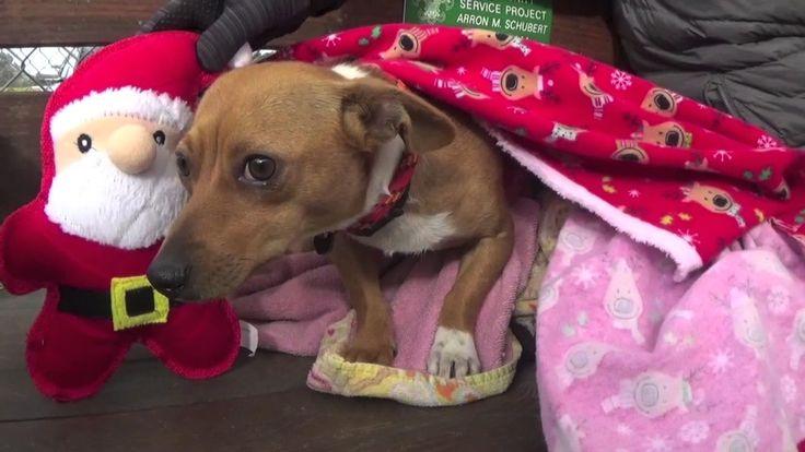 12/31/16 -Please Help Save Lena 1 1/2 yr. Shelter Dog ASAP!