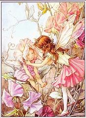 THE SWEET PEA FAIRIES by Cicely Mary Barker: Charms Gifts, De Senteur, Sweetpeafairi Cicelymarybark, Fairies Folklore, Peas Fairies, Indalo Charms, Flower Fairies, Sweet Peas, Des Then