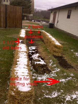 4 The Love Of Family Straw Bale Gardening Good Tips 640 x 480