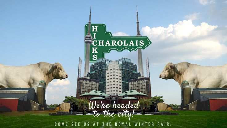 Come see the Agricultural Show at the #Royal #Winter #Fair in #Toronto