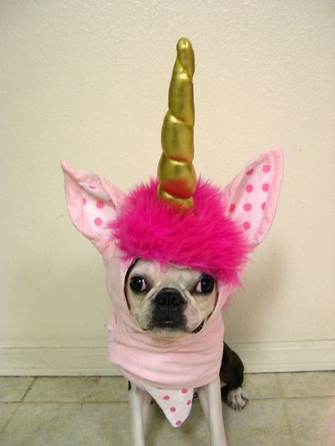 unicorn #dog #costume: Pink Unicorns, Dogs Stuff, Halloween Costumes, Dogs Costumes, Unicorns Pup, Dog Costumes, Boston Terriers, Unicorns Boston, Animal