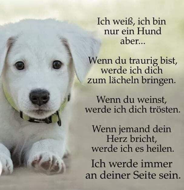 Pin Von Hunde Diy Auf Weisheiten Zitate Hund Witze Hund Zitat Witze