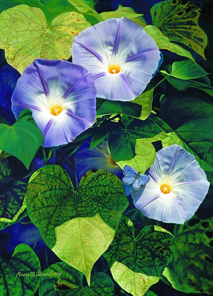 Russell Cobane ~ purple morning glory