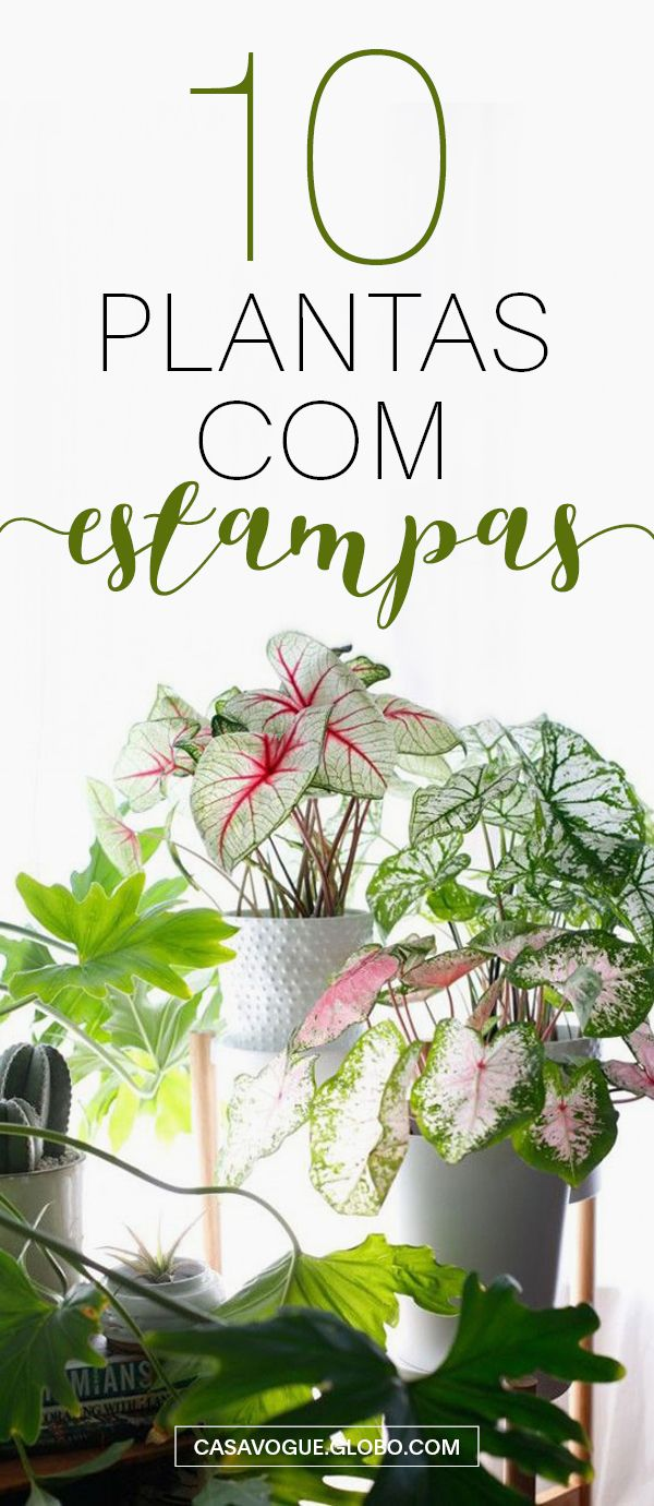 Plantas para ter dentro e fora de casa com folhagens diferentes e lindas!