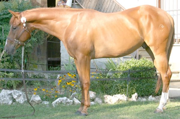 BF Make NO Cowboy...nice mouver.... nice horse