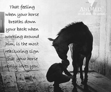 #Horse breath