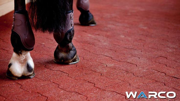 Grâce à la densité bien adaptée et la résistance exceptionnelle, les pavés souples en caoutchouc sont souvent choisis pour les marcheurs et les manèges pour chevaux. Les pavés autobloquants WARCO constituent aussi le revêtement de sol antidérapante idéal pour les douches pour les chevaux !