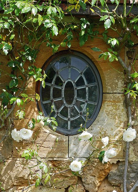 Oval leaded window set in locally quarried stone with white scrambling rose. Barrington Court, Somerset