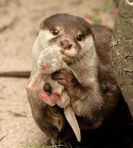 Mommy Otter & Baby <3