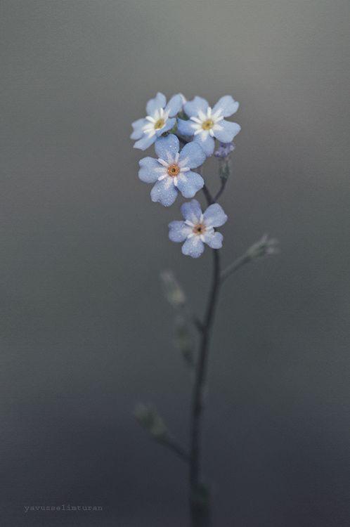 Flower by yavuzselimturan  on 500px