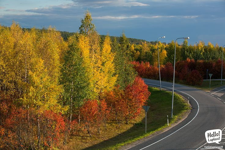 "Vibrant Autumn season in Lapland is called ""Ruska"" for all the color that you can see around!"