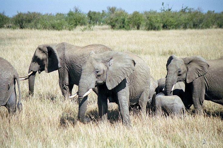 Kenya-Tsavo-east-National-Park-069