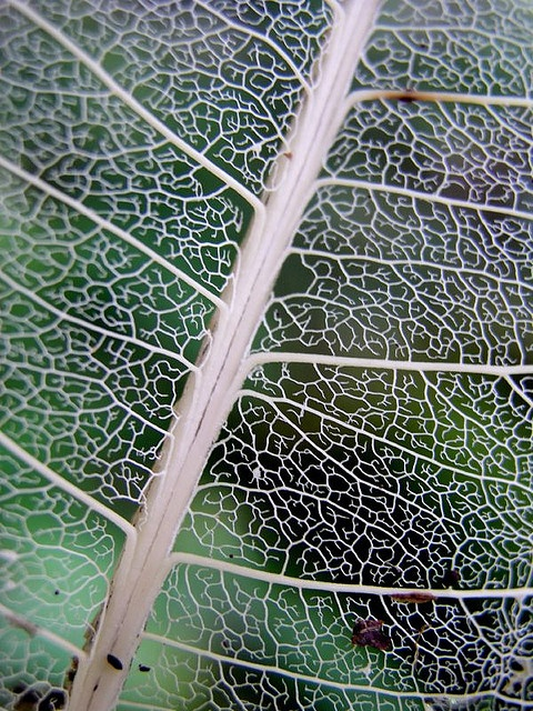 The Ted talk by Ron Eglash about fractals was really intriguing and pointed out that even some of the most everyday things we see, a leaf for example, has so much more complexity behind it than you would realize when first seeing it. This relates to much of our everyday activity.