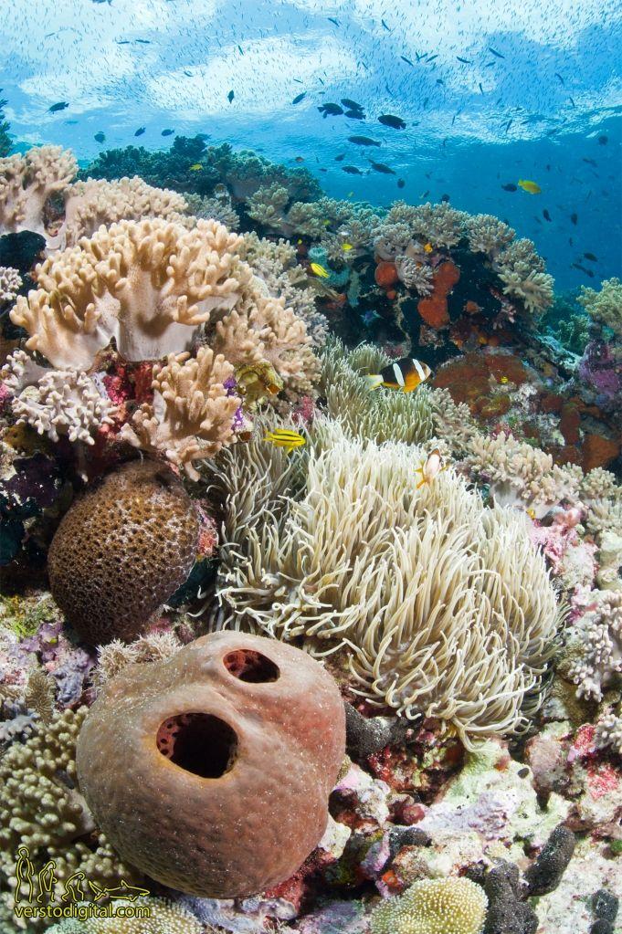 Prachtig koraal en exotische vissen kun je terug vinden in het nationaal zeereservaat Wakatobi. Het gebied is onderdeel van de koraaldriehoek.  Het Wereld Natuur Fonds werkt samen met de overheid en andere organisaties aan bescherming van dit belangrijke zeereservaat.