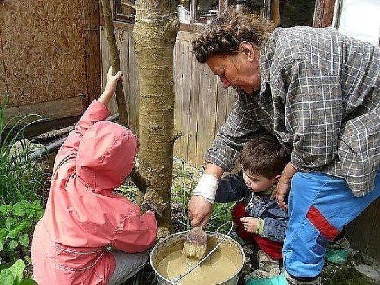 Лечебная болтушка для садовых деревьев.