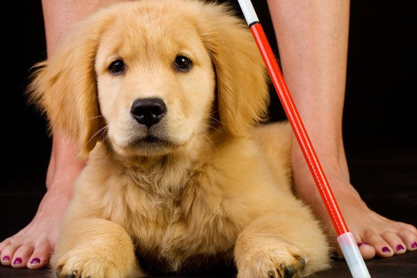 Florida Law Makes Fake Service Dogs a Criminal Offense