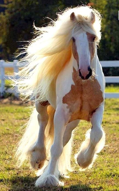 Top 10 Most Beautiful Horses in the World | The most ...