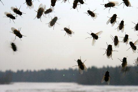 Уничтожение мух на даче, в деревянном доме, квартире, на улице и дачном участке…