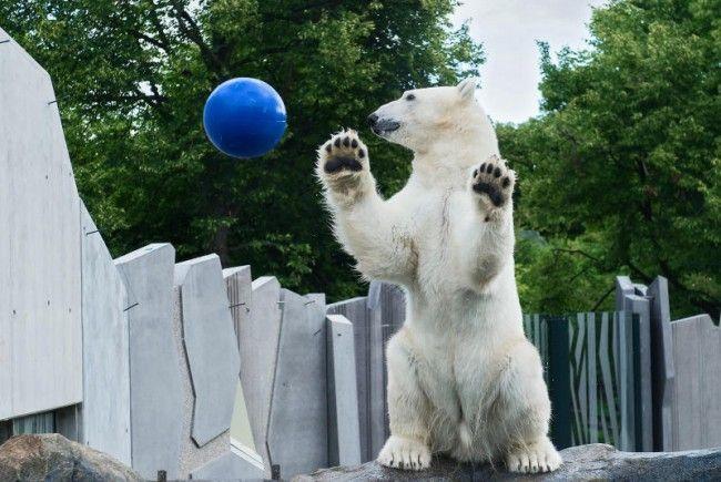 Gratis-Besuch in den Tiergarten Schönbrunn am 29.Juli 2016.