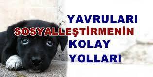 Yavru Köpekler İçin Sosyalleşme İpuçları | İzmir Köpek Eğitim Okulu