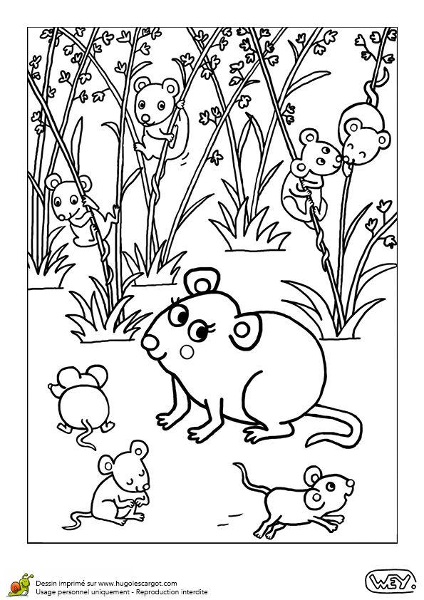 Bebe Animaux Souris Et Souriceaux, page 12 sur 12 sur HugoLescargot.com