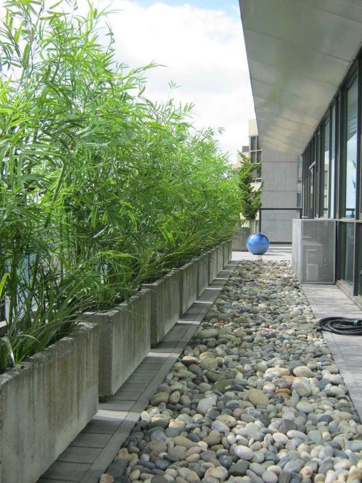 bambous en bacs en béton et allée en galets dans l'arrière-cour