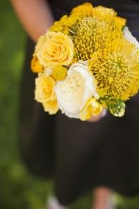 pincushion proteas!