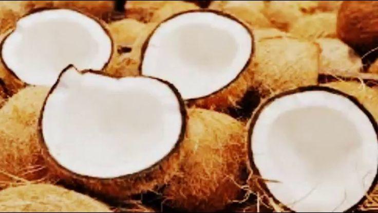 O coqueiro (Cocos nucifera), é um membro da família Arecaceae (família das palmeiras). É a única espécie classificada no gênero Cocos. 5 razões pelas quais o coco deve ser incluído na dieta: