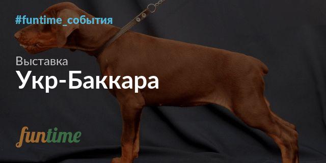 """Восьмая всепородная выставка собак """"Укр-Баккара 2017"""" в Киеве"""