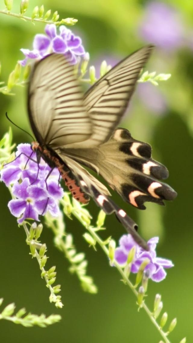 butterfly, Animals