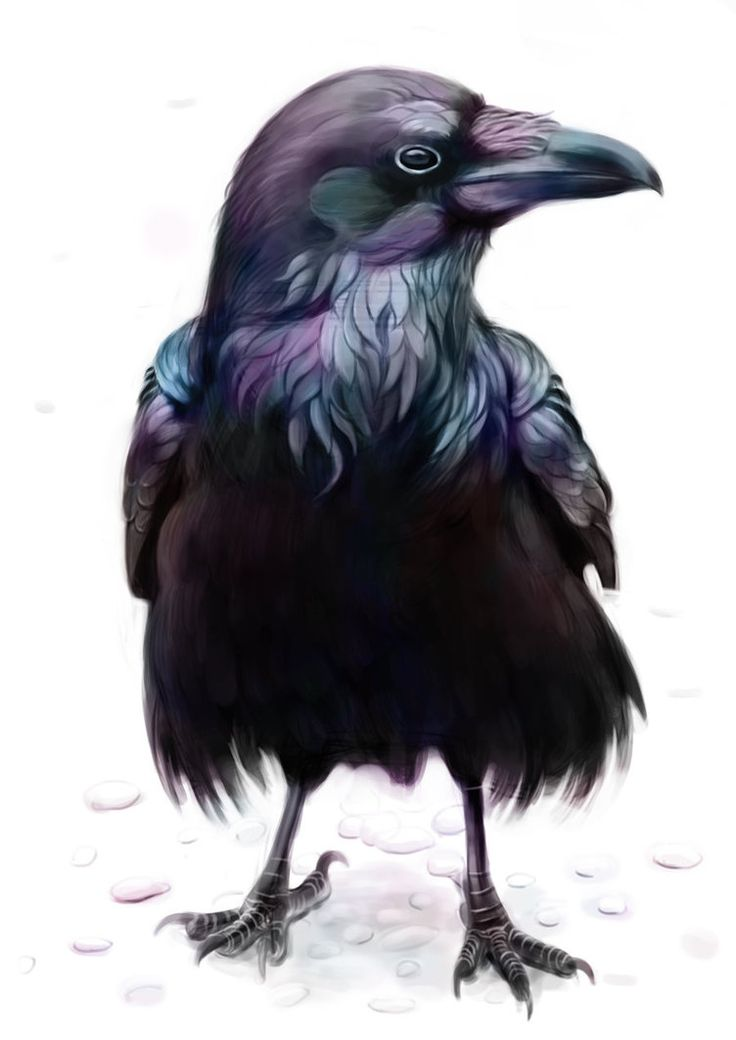 Ravens::A beautiful and misunderstood creature. The Raven is often nothing more than a messenger from the divine beings of the universe.