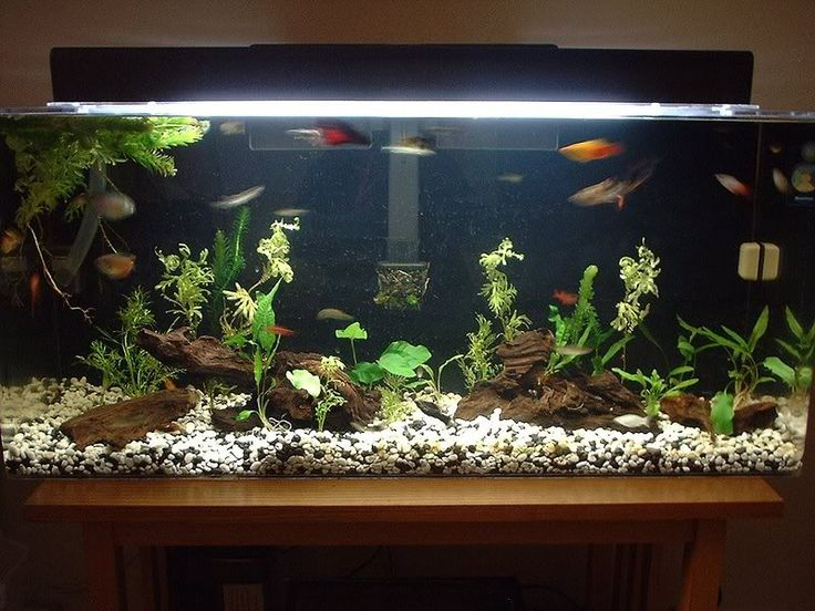 17 best images about fish tank set ups on pinterest for Aquarium decoration set