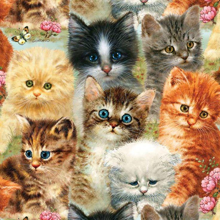много картинок в одной картинке с котятами разных стадиях жизненного