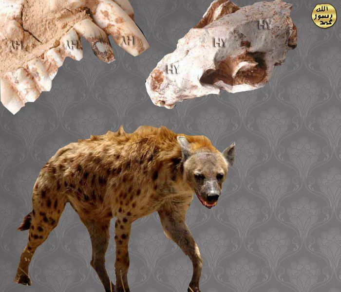 Sirtlan Kafatasi http://dusuneninsanlaricin.com/30-fosilde-evrim-teorisinin-cokusu/