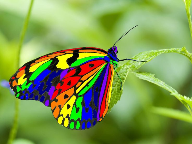 A rainbow of colors on a tiny butterfly! Amazing.