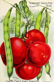 """Image from page 18 of """"Seed annual 1906"""" (1906) Esta receta de salsa de tomate es muy sencilla. Sirve tanto para crear una salsa  con tomates naturales, como para enriquecer y mejorar salsas de tomate enlatadas."""