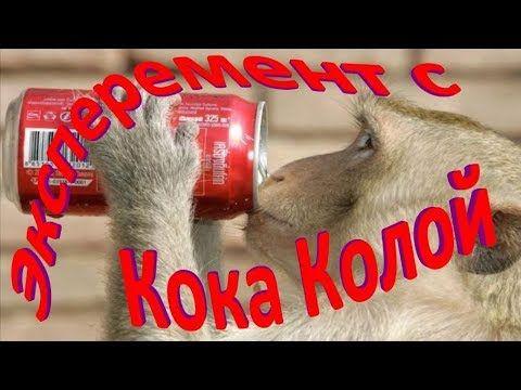 Что будет если пить Кока Колу каждый день? Эксперимент с Кока Колой.