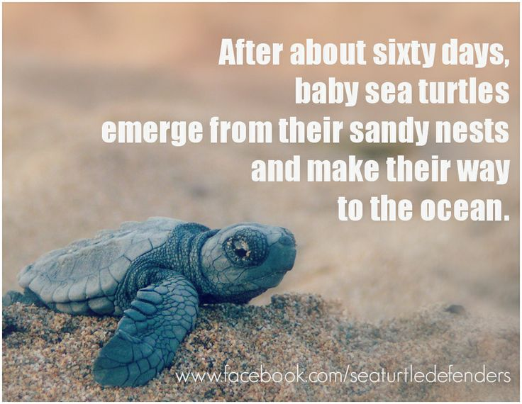 Turtle Quotes Inspiration 127 Best Turtletortoise Quotes Images On Pinterest  Turtles Funny .