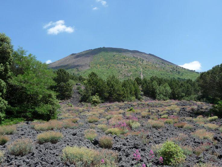 blackmagic - Vegetation on Vesuvius (Valeriana rossa and Rumex scutatus)