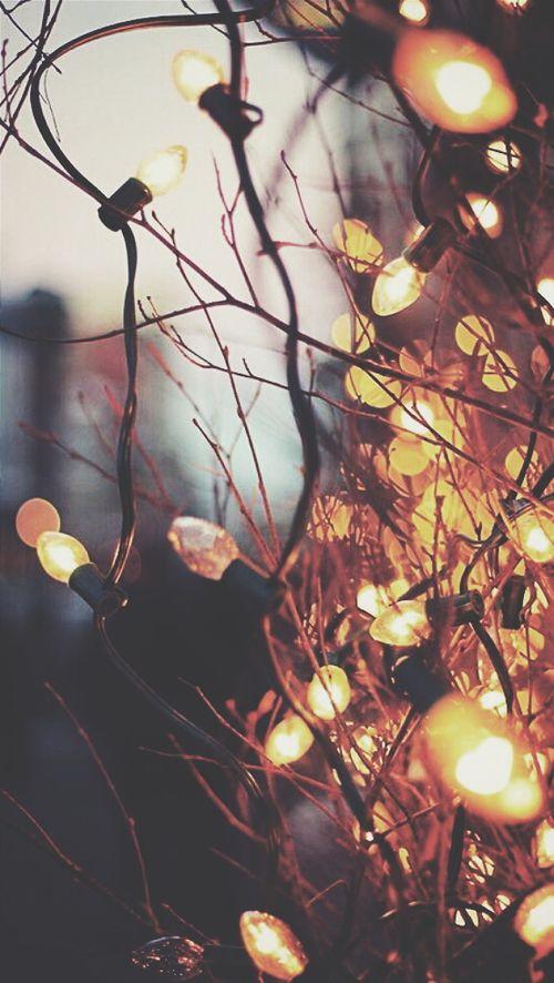 christmas lights,and december