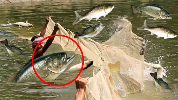 Fishing | WOW! amazing fishing | Traditional fishing | How to catch fish Part 01 fishing | WOW! amazing fishing | Traditional fishing | how to catch fish (part 001) ------------------------------------------------------------------ PLEASE SUBSCRIBE TO OUR CHANNEL & Like This Video ----------------------------------------------------- Fishing - amazing two girls deep hole fishing - how to fishing in battambang - Cambodia fishing (part 64). amazing Cambodian people catching fish by using the…