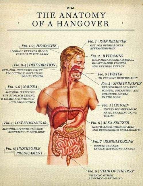 The #Anatomy of a Hangover.  #hangover #drugs #trip #high #SUPERHIGH