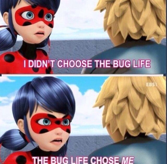 Funny Ladybug Meme : Best miraculous ladybug images on pinterest ladybugs