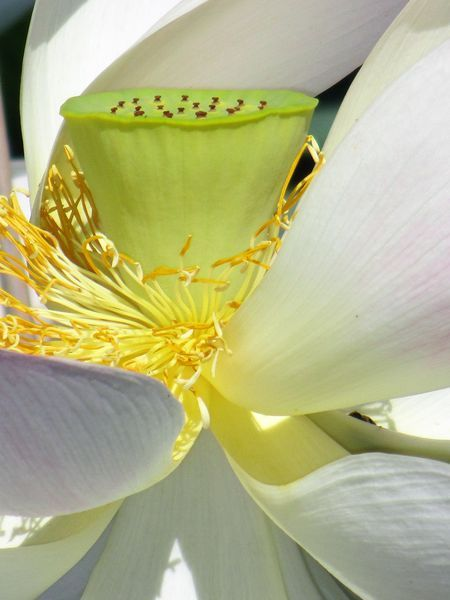 Detail of a beautiful flower Photo by Plesea Magdalena — National Geographic Your Shot