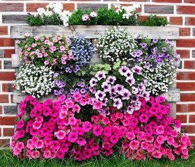 """Hallo Leute,      es ist ruhig.   Bei dem """"tollen"""" Wetter möchte wohl keiner Blumen. Kann man ja verstehen. Erst ist es so heiß, dass man e..."""
